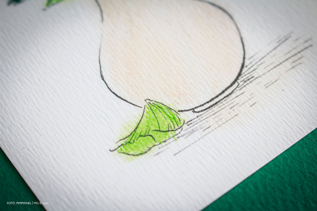 AkvarellGrafikák_No27_Fenyo+Fehér_C-Váza_01.indd